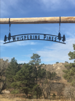Whispering Pines in Colorado