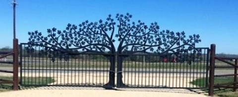 Oak_Tree_Ranch_Gat_20170830-155041_1